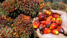 L'olio di palma fa male? Sfatiamo i miti.